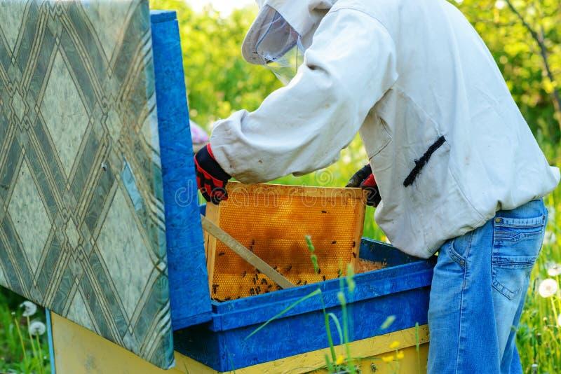 работа 2 лета дня beekeepers apiary солнечная Лето стоковое изображение rf