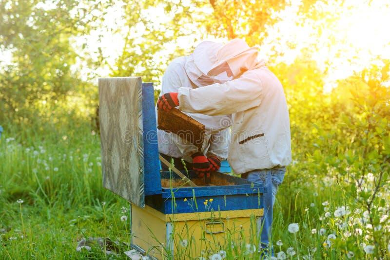 работа 2 лета дня beekeepers apiary солнечная Лето стоковые фото