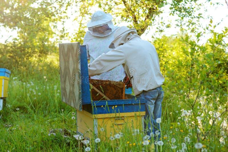 работа 2 лета дня beekeepers apiary солнечная Лето стоковая фотография rf