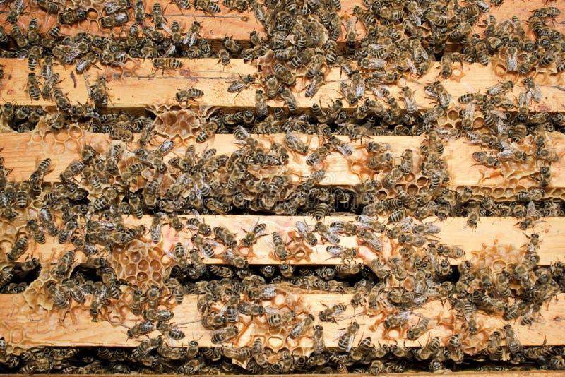 работа пчел стоковое изображение
