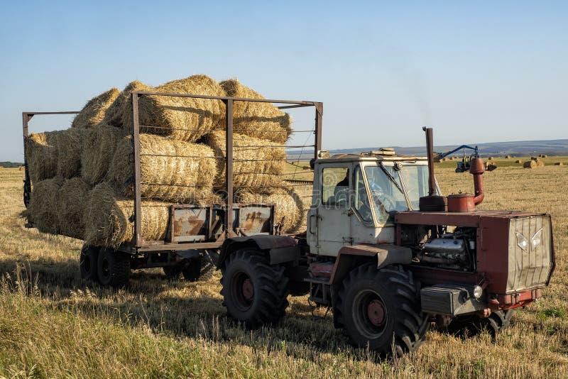 Работа фермы в осени на поле стоковое фото rf