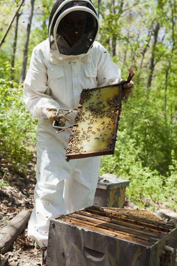 работа beekeeper стоковое изображение