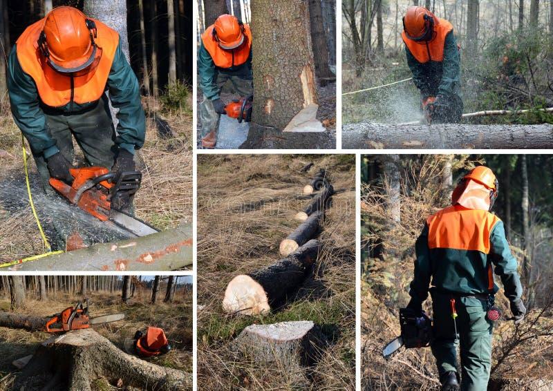 работа woodcutter пущи установленная стоковые фотографии rf