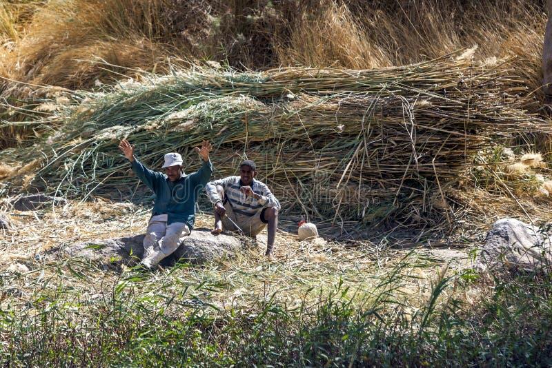 Работники принимают пролом от тростников вырезывания вдоль западного берега реки Нила около Асуана в Египте стоковые фото