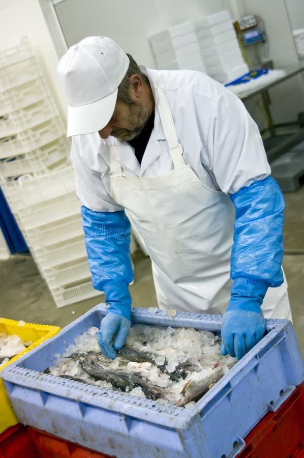 работник еды фабрики стоковая фотография rf
