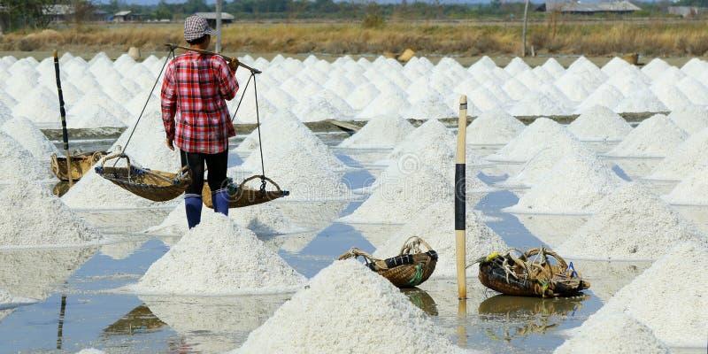 Работник жать соль в поле соли стоковое изображение