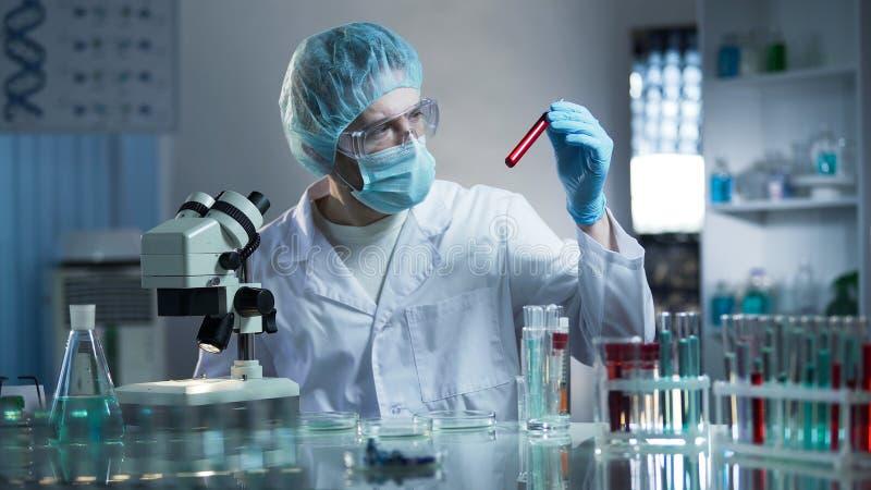 Работник лаборатории изучая пробы крови для того чтобы обнаружить патологии, медицинское исследование стоковые изображения rf