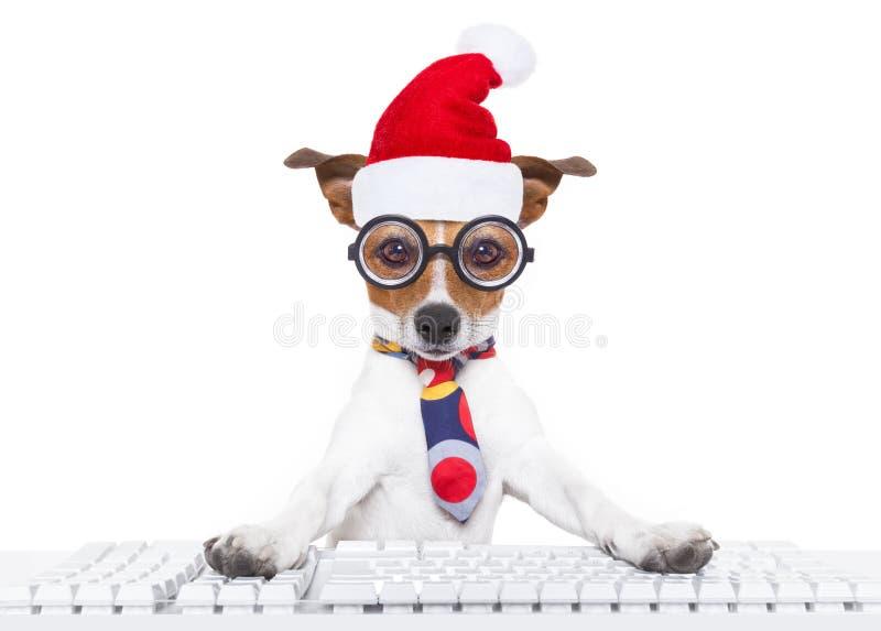 Работник офиса собаки на праздниках рождества стоковые изображения