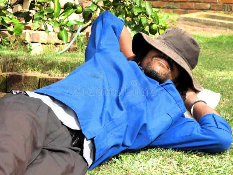 работник сада афроамериканца стоковая фотография