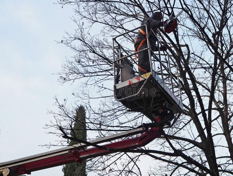 Работник с цепной пилой подрезает деревья от воздушной платформы на серый зимний день стоковая фотография