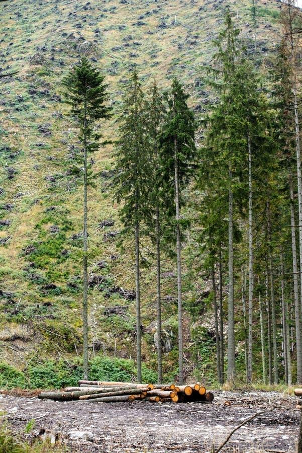 работы forester, древесина входят в систему большие большие кучи около леса стоковые фотографии rf