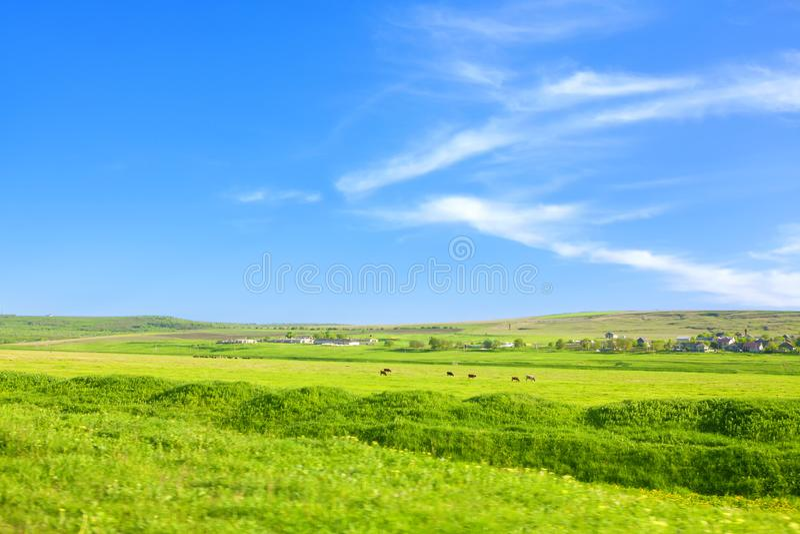 Равнина зеленого цвета в лете стоковое фото