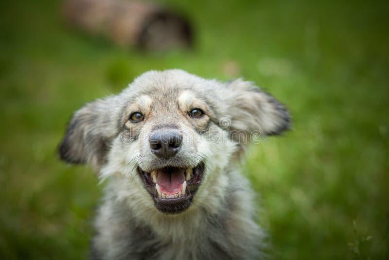 Радостная собака на конце прогулки вверх стоковое изображение rf