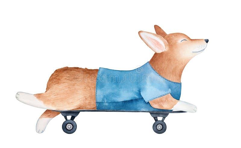 Радостный щенок Пембрука corgi валийца в голубой футболке, лежа на скейтборде иллюстрация вектора