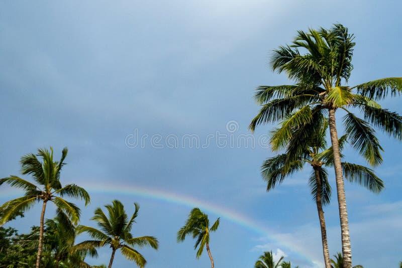 Радуга против мглистой предпосылки голубого неба обрамленной пальмами стоковое фото