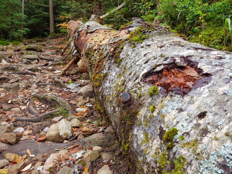 Разваленное упаденное дерево кладя на траву в национальном парке Ordesa y Monte Perdido, Уэске r стоковое изображение