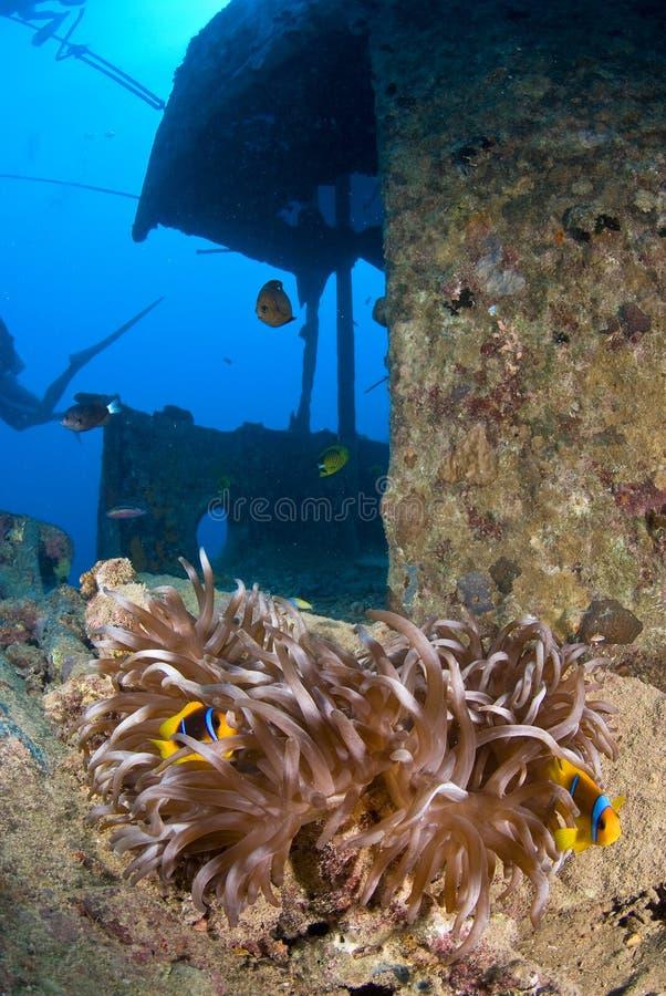 развалина корабля clownfish стоковые изображения