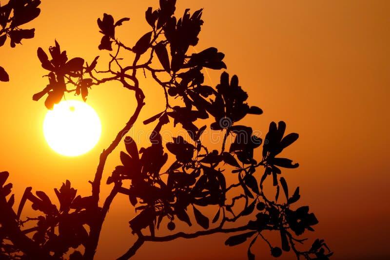Разветвите в восходе солнца стоковая фотография