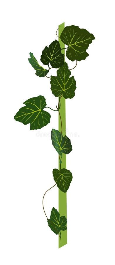 Разветвите с зелеными листьями grapevine На белой предпосылке иллюстрация штока