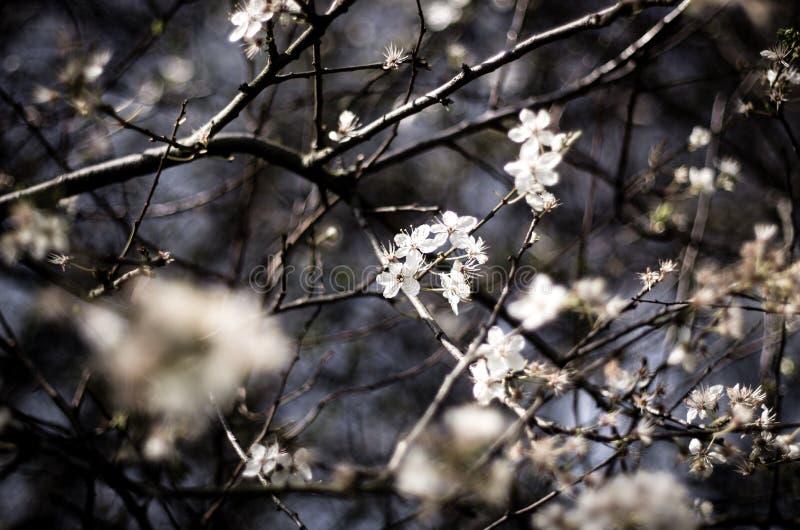 Разветвите с цветками против неба стоковые фото