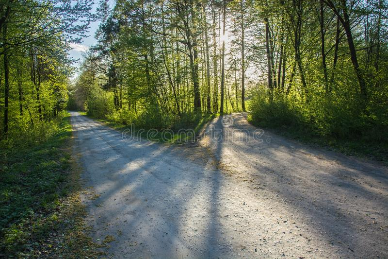 Разветвленная дорога и зеленые деревья и свет солнца стоковые изображения rf