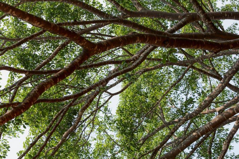 Разветвляет дерево в больших джунглях природы стоковое фото rf