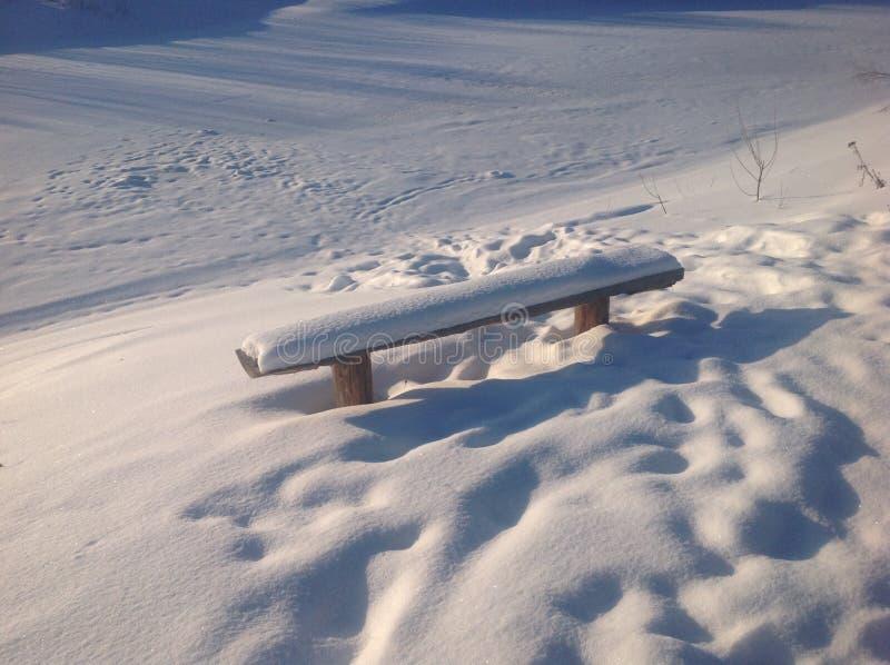 Разветвьте в снежке стоковое фото