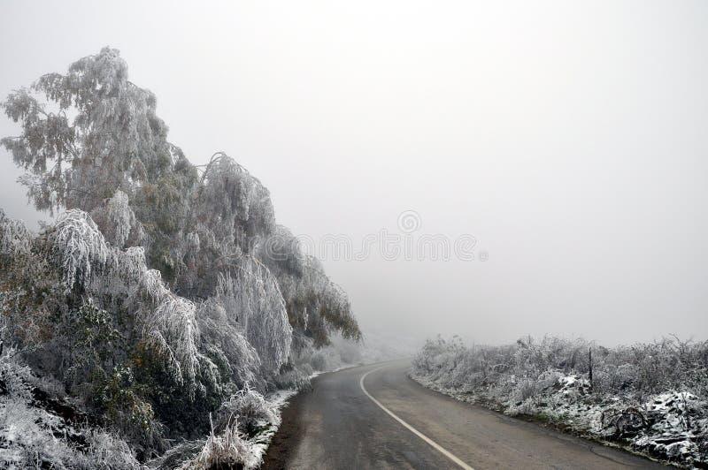 разветвляет зима взгляда вала снежка ели стоковое изображение