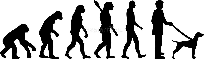 Развитие Vizsla эволюционировать иллюстрация штока