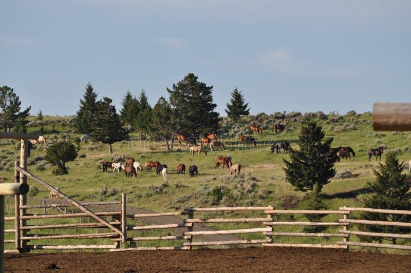 разводить уединение выгона лошади хуторянина стоковое изображение rf