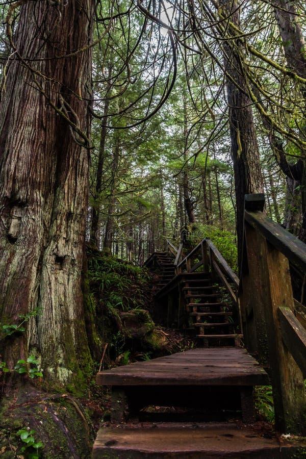Раздел лестницы следа к крышке шхуны, острову ванкувер, Канаде стоковое изображение rf
