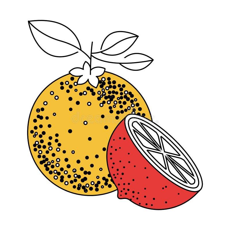 Раздел цвета силуэта одного оранжевого плода и оранжевого куска иллюстрация вектора