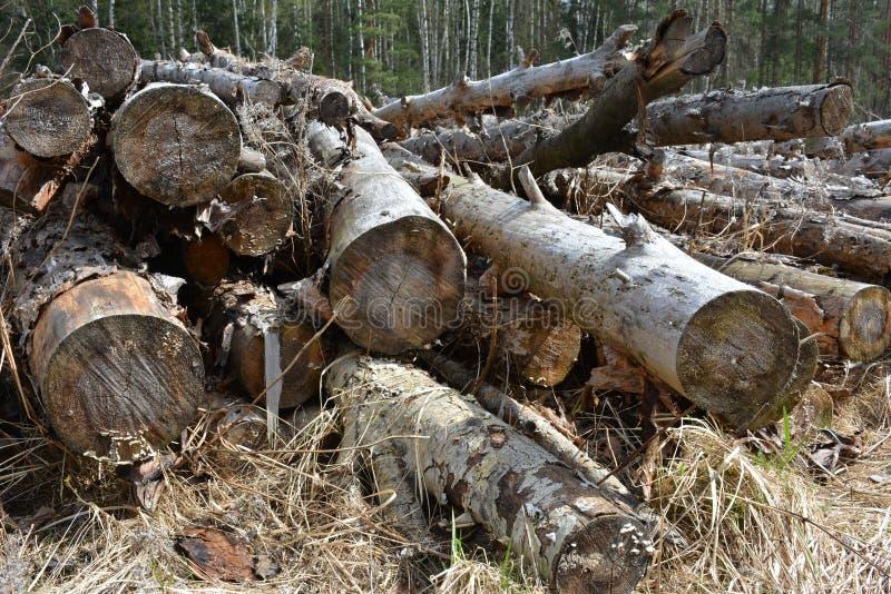 Разжигать древесина стоковые изображения