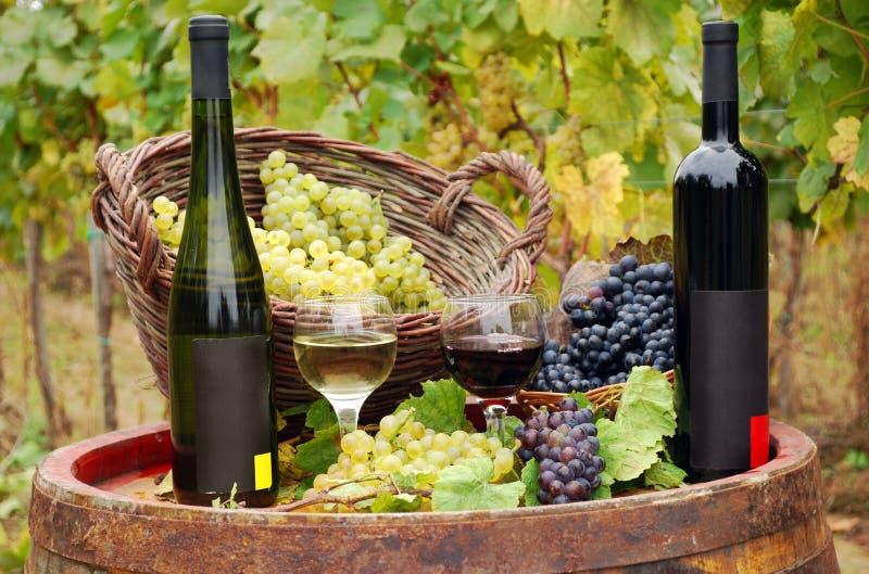 разливает красное белое вино по бутылкам стоковые фотографии rf