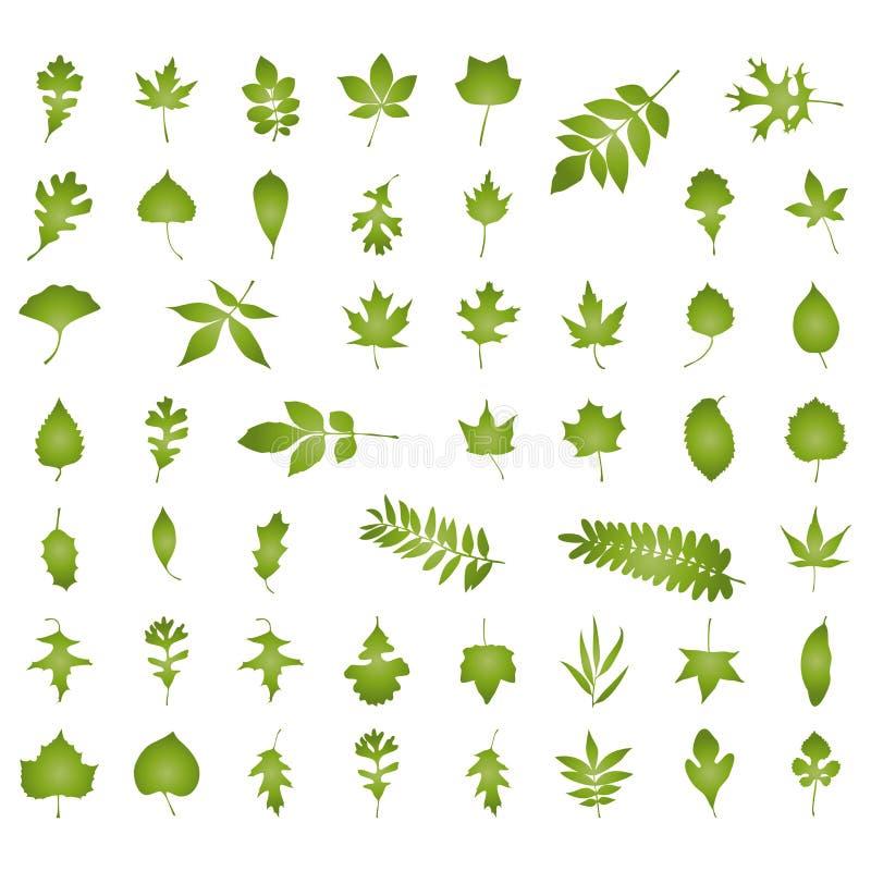 различное добросердечных листьев естественное бесплатная иллюстрация