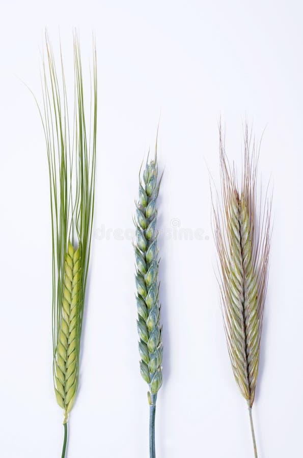 различное зерно стоковые изображения