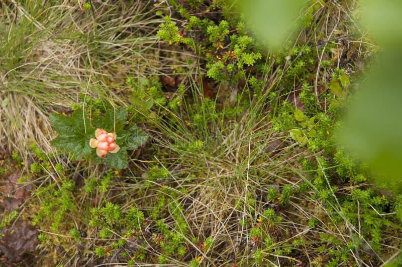 Различные виды красивого поля цветут blossoming в Норвегии стоковая фотография