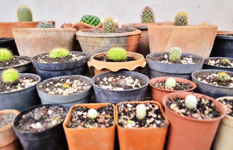 Различные зеленые кактусы, колючий завод в баках стоковое изображение
