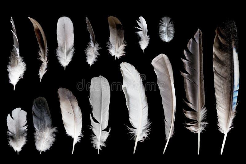 Различные пер птицы стоковое фото rf