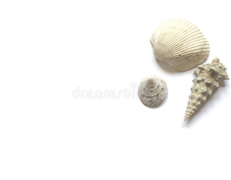 Различные раковины моря изолированные на белой предпосылке стоковая фотография