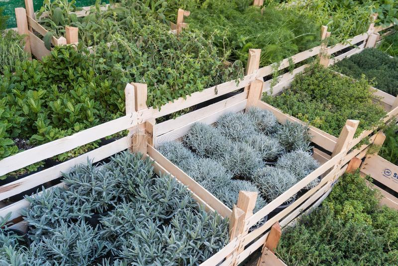 Различные свежие зеленые травы на рынке на открытом воздухе стоковые изображения rf