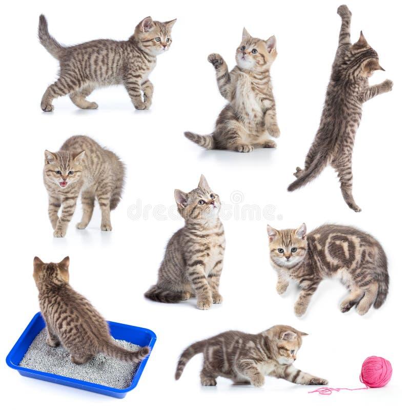 Различные смешные установленные коты изолированными стоковая фотография rf