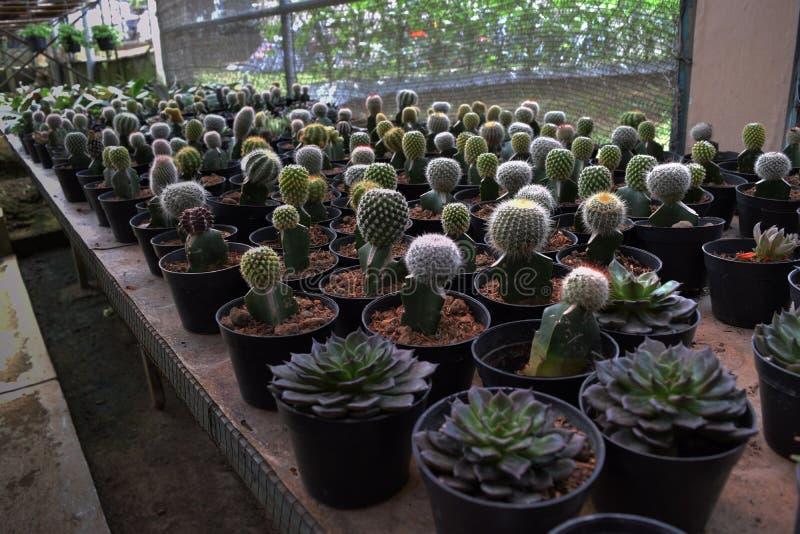 Различные типы кактуса стоковое фото rf