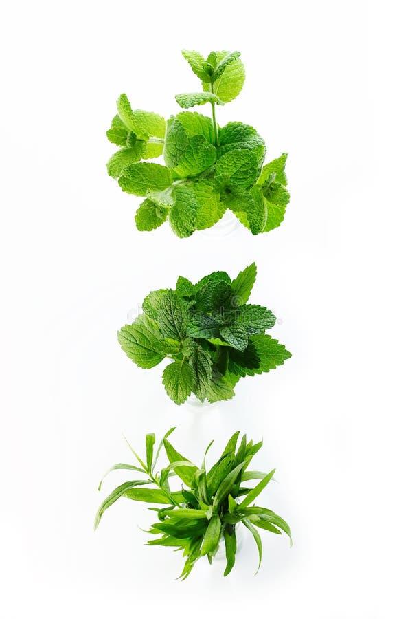различные травы стоковые фотографии rf