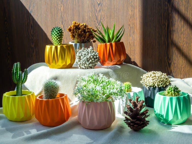 Различные цветки и заводы кактуса с много геометрических конкретных плантаторов Покрашенные конкретные баки для домашнего украшен стоковое изображение rf