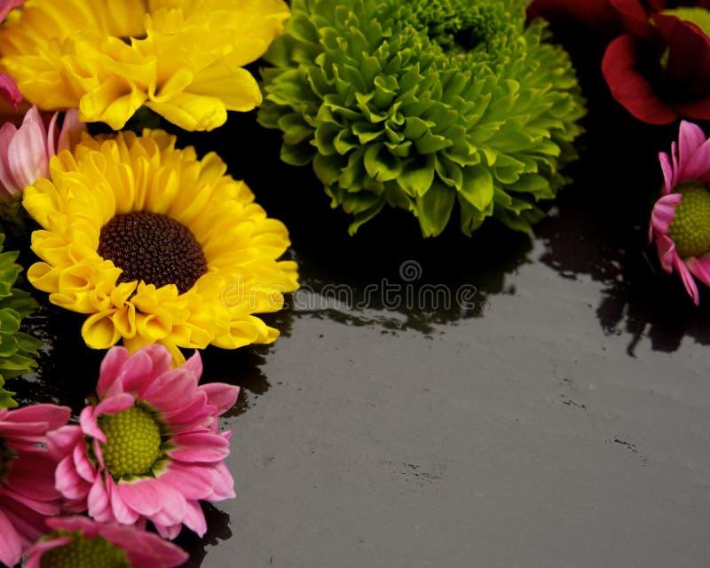 Различные цветки стоковое изображение rf