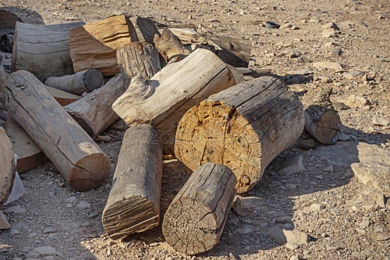 Различные части спиленных стволов дерева стоковые фото