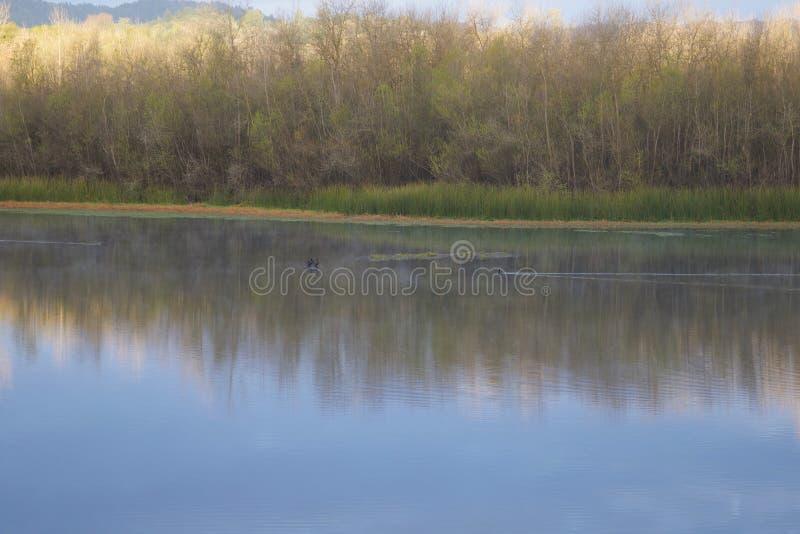 Размещенный вдоль русского реки, парк берега реки региональный как раз минуты от городских Виндзора и Healdsburg стоковые фото