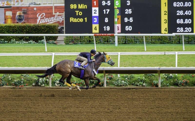Разминка лошади гонки, Del Mar, Калифорния стоковая фотография rf