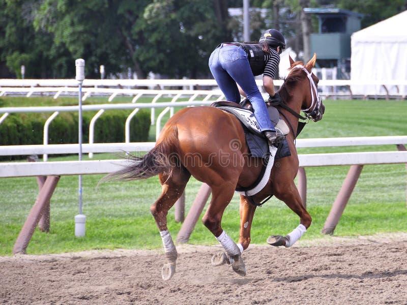 Разминки утра Saratoga - конюшни Тод Pletcher стоковые изображения